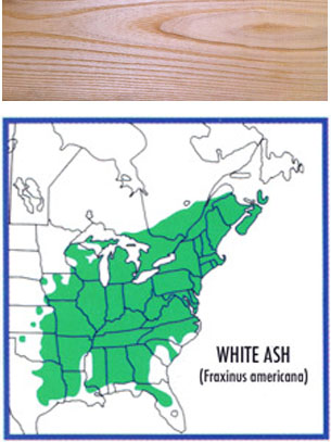 map of where white ash grows and a wood swatch