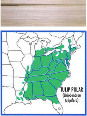 map of where tulip poplar grows and a wood swatch